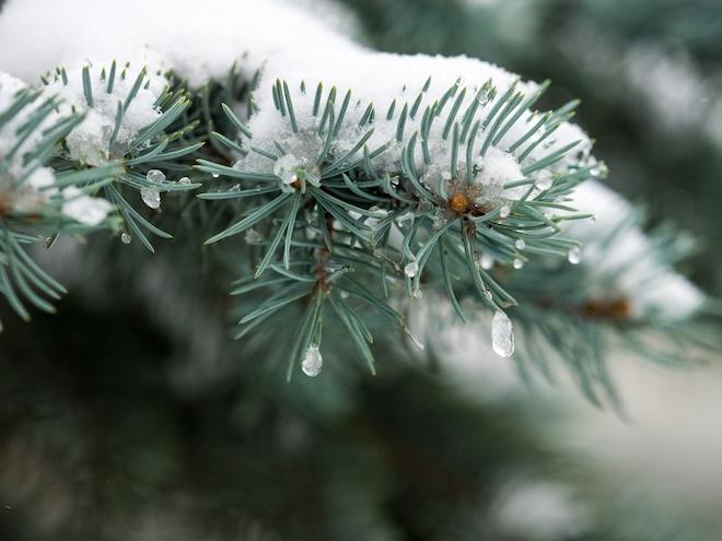Как растения приспосабливаются к холодам?