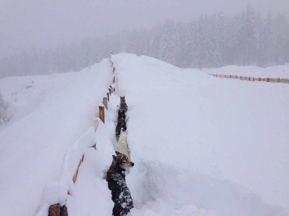 Жертвами снегопадов в Германии и Австрии стали 9 человек