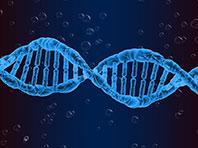 Толкать человека на риск могут особые мутации в геноме