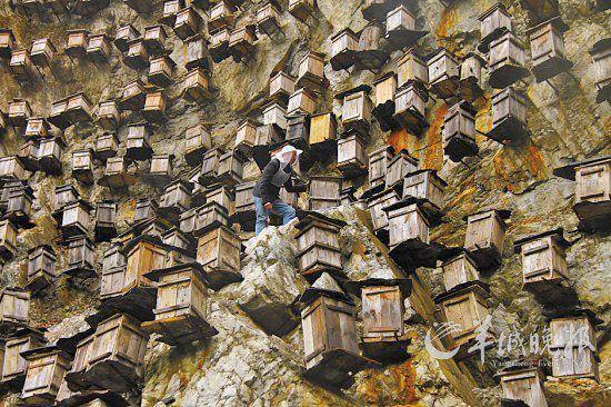 В Китае построили небоскреб для пчел