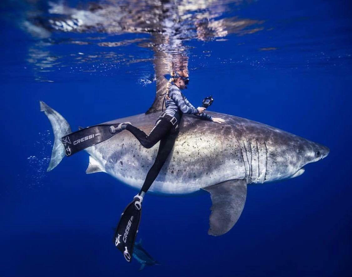 Девушка поплавала с гигантской белой акулой