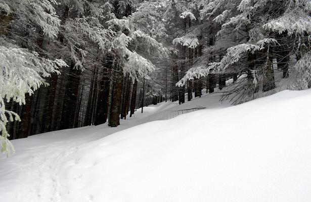 Снежный апокалипсис вЕвропе. Лавины унесли жизни 20человек