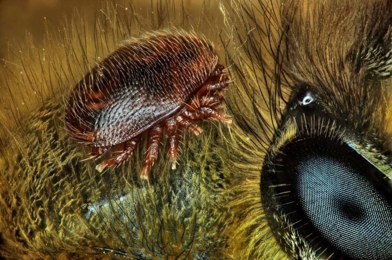 Названа главная причина разрушения пчелиных семей