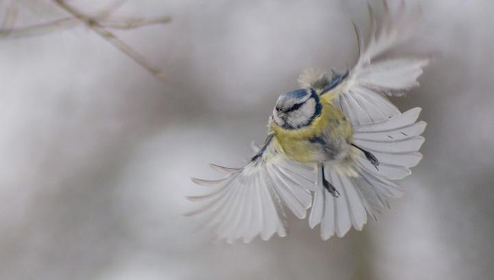 Эксперт разъяснил, превращает ли глобальное потепление птиц в жестоких убийц