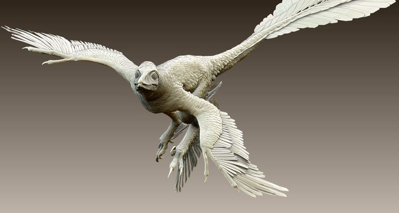 Пернатые динозавры научились летать раньше птиц