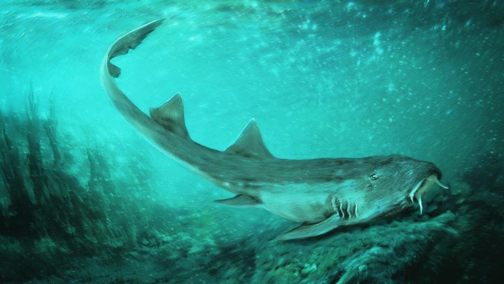 Найдены останки вымершей акулы с