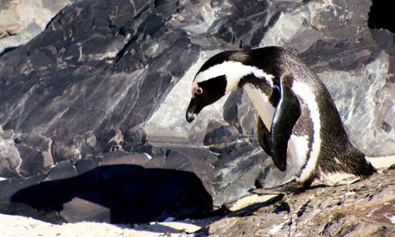 Ученые объяснили разнообразие теплокровных хищников в холодных водах