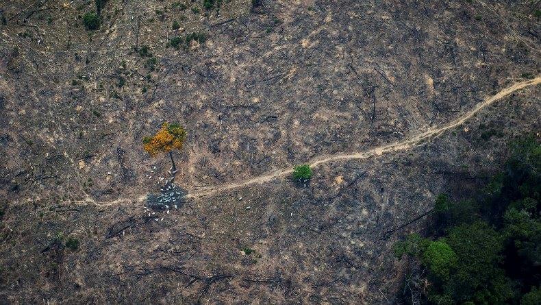 Заброшенные поля зарастают лесом в пять раз быстрее, чем считалось