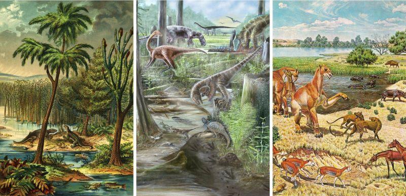 Современный уровень биоразнообразия на суше почти не изменился за последние 60 миллионов лет