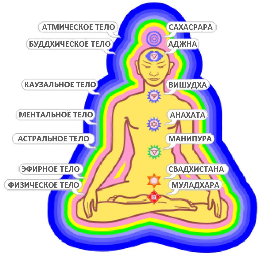 Эзотерический взгляд на мир предполагает, что у человека имеется семь тонких тел: атманическое, буддхиальное...