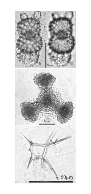 планктон фото сверху