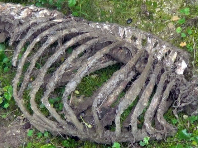 В Азербайджане нашли скелет чупакабры CVAVR AVR CodeVision cvavr.ru
