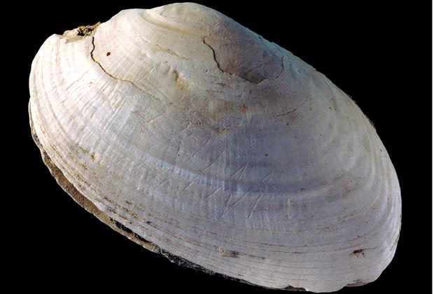 Древнейший доисторический орнамент обнаружен в Индонезии CVAVR AVR CodeVision cvavr.ru