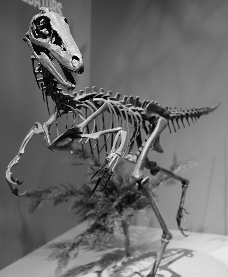Динозавроиды: Загадка троодона и змееподобные пришельцы CVAVR AVR CodeVision cvavr.ru