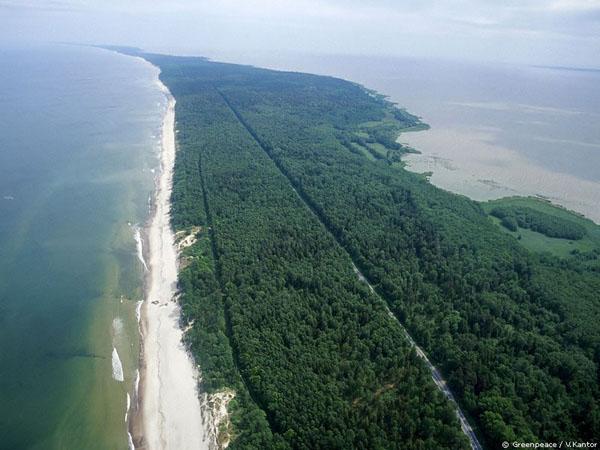 На Куршской косе ураган Феликс частично разрушил береговой защитный вал CVAVR AVR CodeVision cvavr.ru