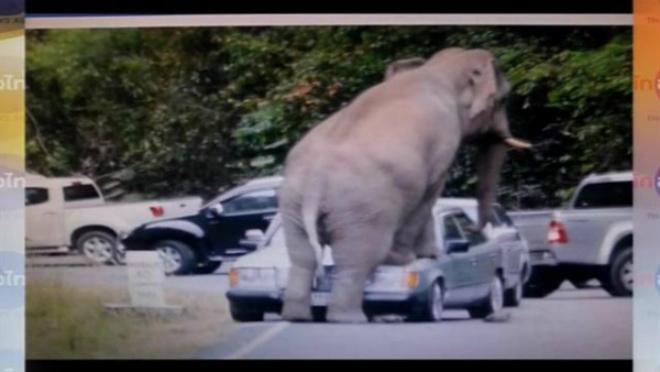 В Таиланде слон растоптал автомобиль с туристами CVAVR AVR CodeVision cvavr.ru