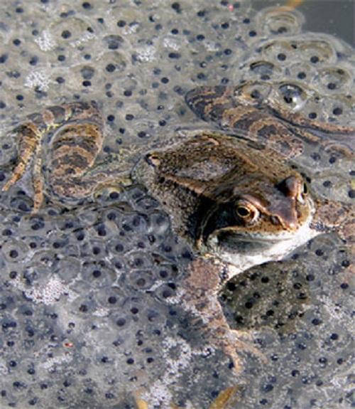В Англии посреди зимы размножаются лягушки CVAVR AVR CodeVision cvavr.ru
