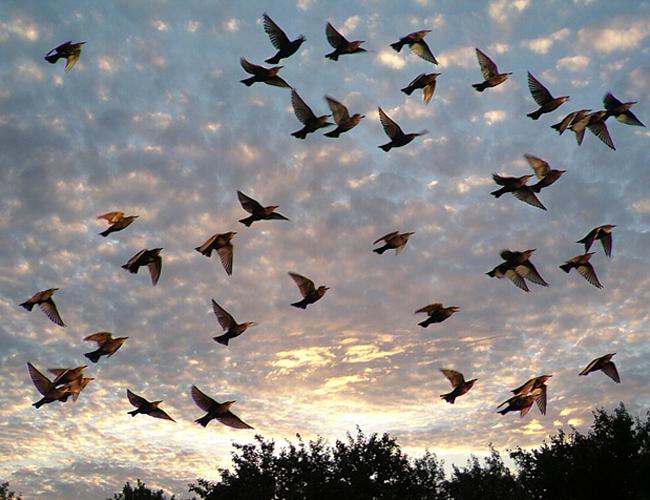 брачный период у птиц: