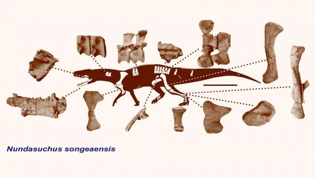 Археологи нашли крокодила жившего еще до динозавров CVAVR AVR CodeVision cvavr.ru