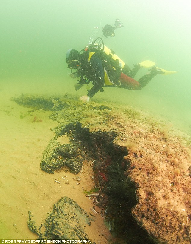 У побережья Норфолка нашли доисторический лес CVAVR AVR CodeVision cvavr.ru