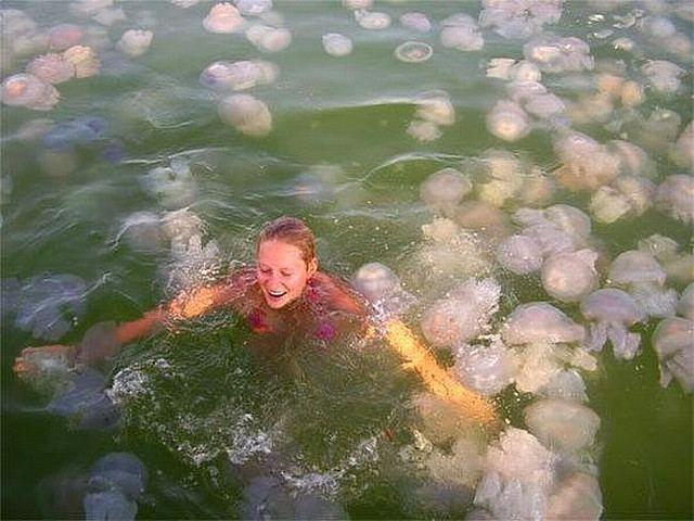 Обнаружена способность медуз чувствовать течения и плыть против потоков воды CVAVR AVR CodeVision cvavr.ru