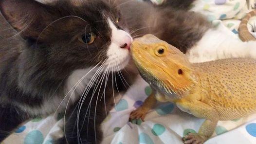 Кот ест ящерицу