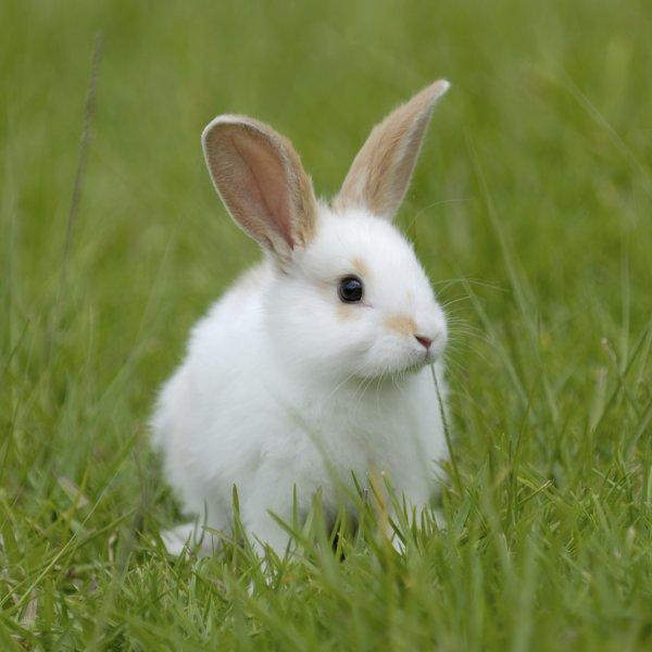 Ученые научились размораживать мозг кролика без повреждений