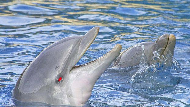 Сексуальность дельфинов