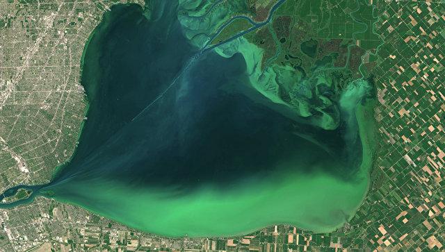 Установлена причина появления токсичных водорослей в озерах Америки | Земля - Хроники жизни