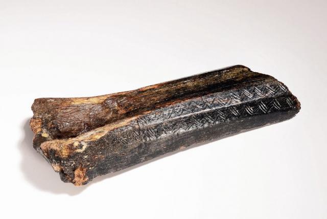 В Северном море нашли древнюю кость зубра с узорами