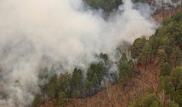 В Индии во время лесного пожара погибла группа туристов