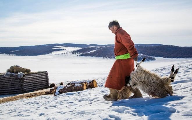 В Монголии из-за аномальной зимы погибли сотни тысяч животных