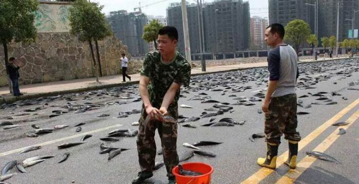 Рыбные дожди прошли в Иране, Китае и Индии