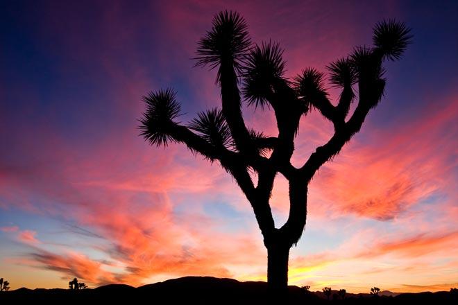 Под угрозой исчезновения оказались уникальные деревья