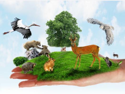 Животные стремительно вымирают
