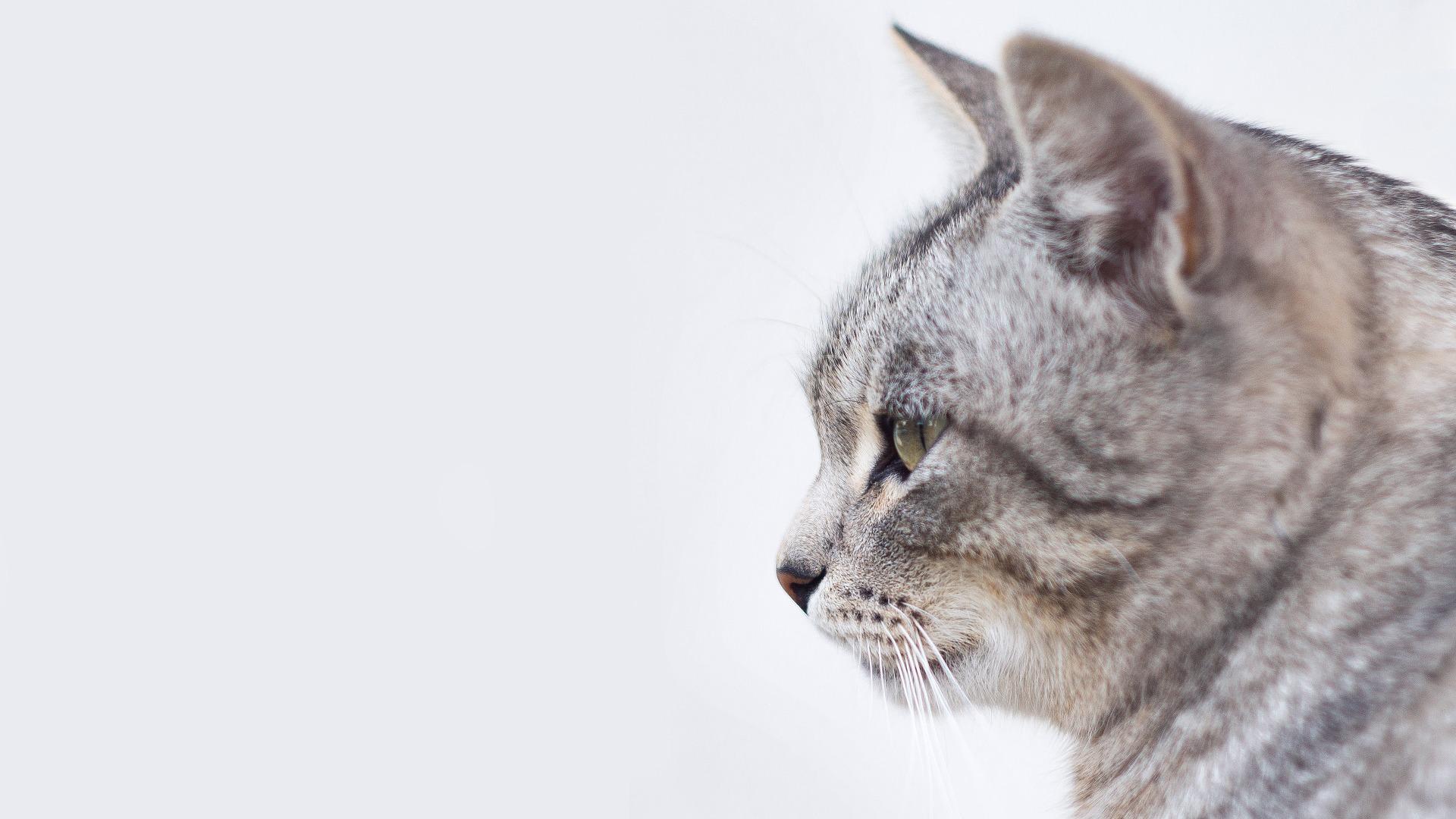 корм для кошек ВЕЗУКОРМ.ру.jpg