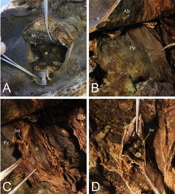 В Арктике нашли средневековые мумии