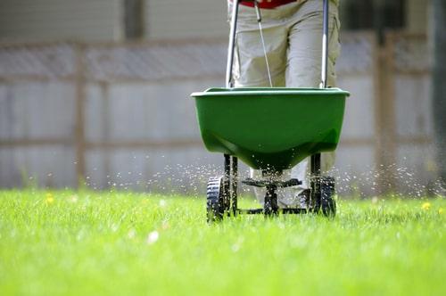 Удобряем газон