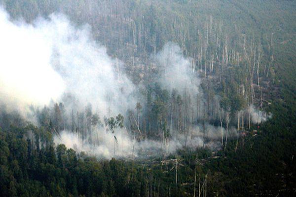 На Алтае вспыхнули лесные пожары