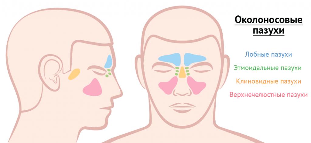Расположение лицевых пазух человека
