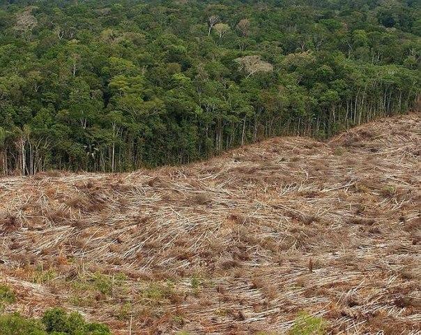 Земля потеряла 18 миллионов гектаров лесного покрова в 2014 году | Земля - Хроники жизни