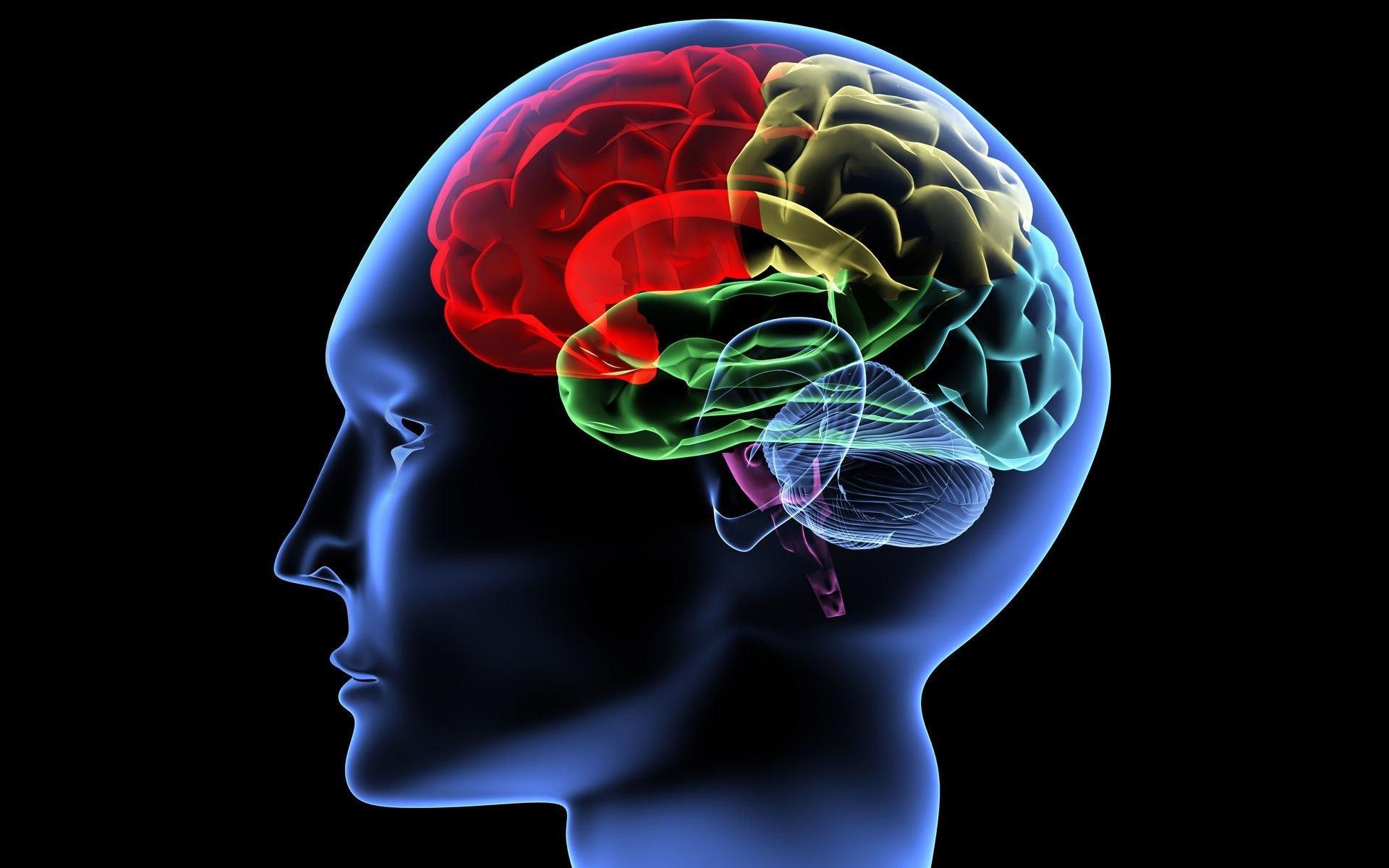 Чтение и литература: Книги по развитию мозга