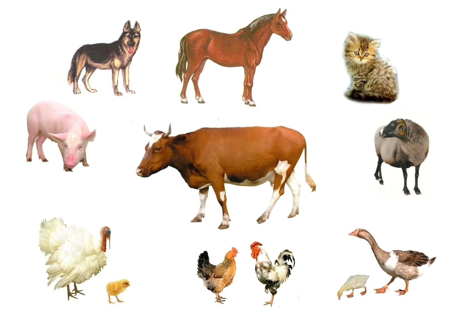 Ветеринарные препараты для лечения и профилактики птицы, свиней, крупного рогатого скота, коз, овец, лошадей, собак...