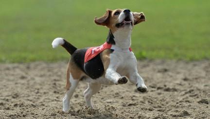 Собаки действительно понимают, что мы говорим CVAVR AVR CodeVision cvavr.ru