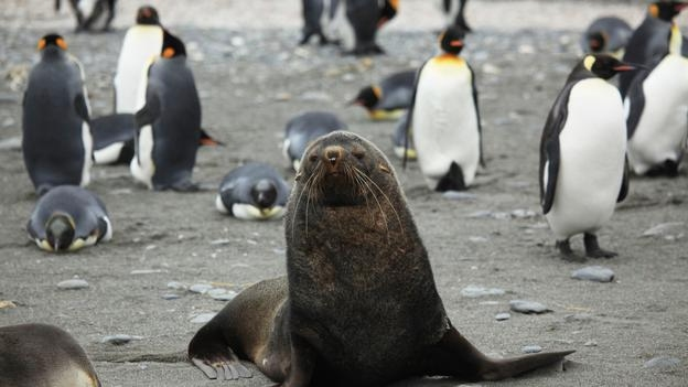 Морские котики насилуют и пожирают пингвинов CVAVR AVR CodeVision cvavr.ru