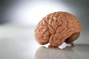 человеческие фото мозги