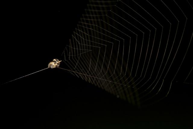 Как сделать паутину и летать на ней