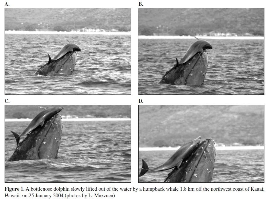 http://earth-chronicles.ru/Publications_7/3/dolphinswhale1.jpg