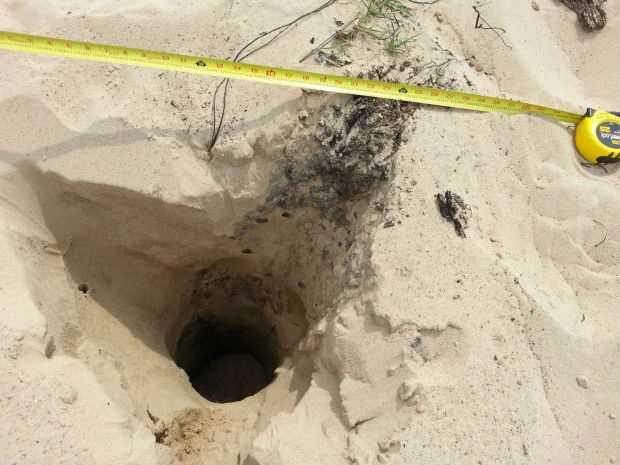 Ученые назвали внезапно разверзающуюся дюну феноменом - необъяснимым геологическим явлением