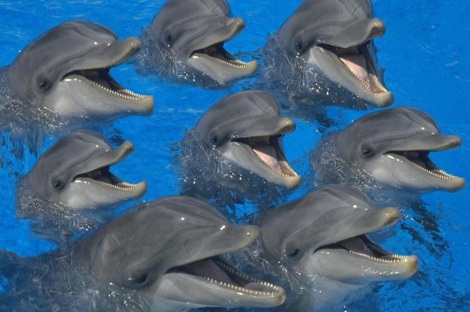 Дельфины – что мы знаем о них CVAVR AVR CodeVision cvavr.ru